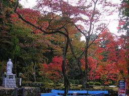 kyoto_saimyouji 011.jpg
