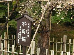 kyoto_saimyouji 020.jpg